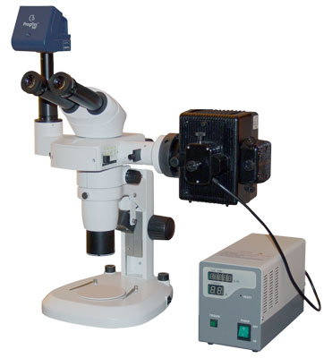 Advanced Stereo Zoom Microscope with Fluorescent Attachment
